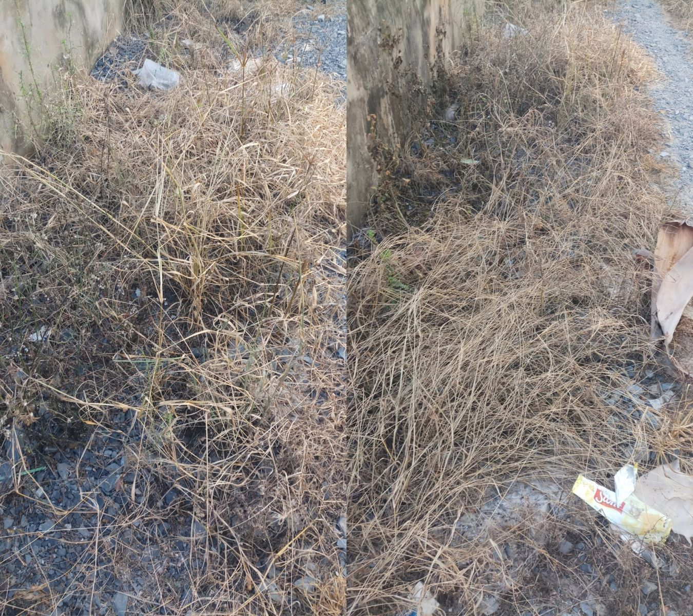 Sanuron 800WP diệt cỏ bờ ruộng